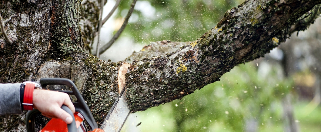 tree service and tree removal pros in Greer SC