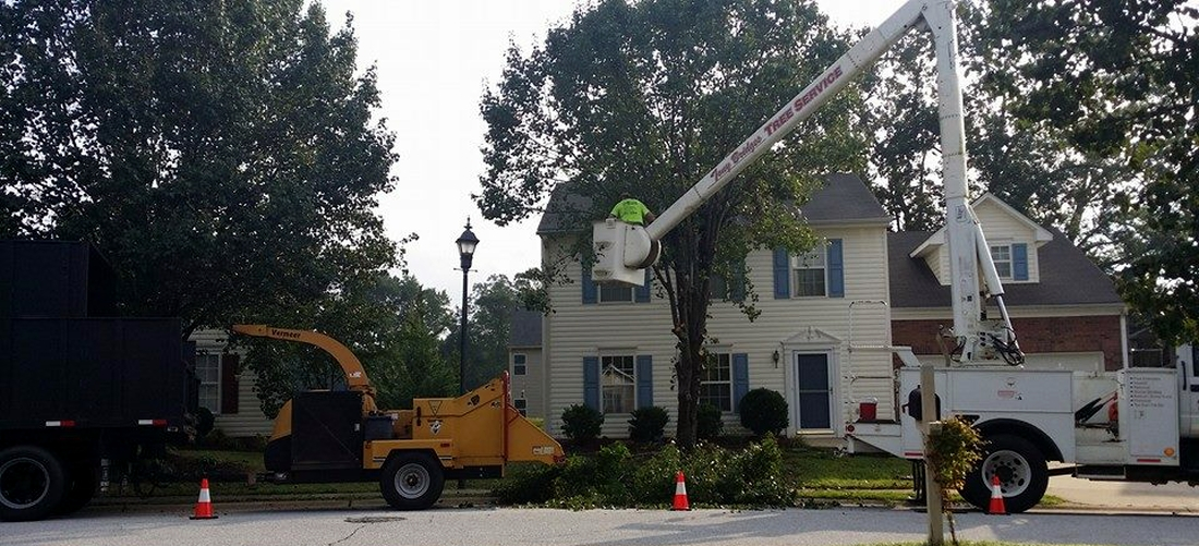 Tree Trimming Service In Greenville SC