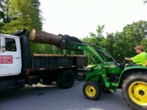 hire tony bridges tree service