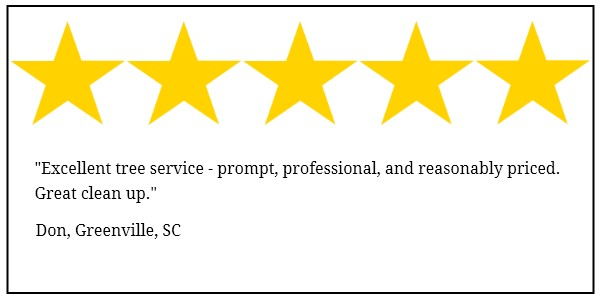 tony bridges tree service 5 star review