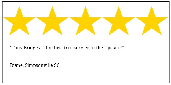 Simpsonville tree service 5 star review
