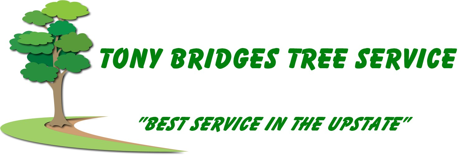Tony Bridges Tree Service | Greenville Tree Service Experts